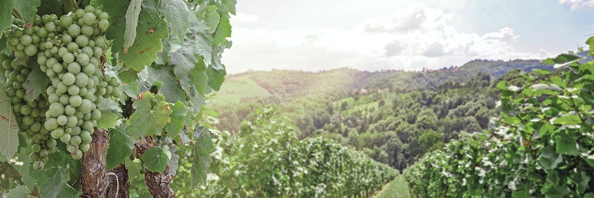 Wein des Monats Mai