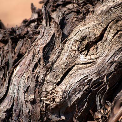Lernen Sie Terroir X kennen - ein Eigenanbau-Weinprojekt von Silke in internationaler Spitzenklasse: brillante Qualität mit edlem Terroir für höchste Ansprüche
