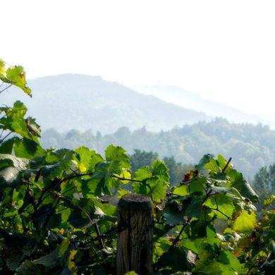 Die Pfalz ist eine Region der unterschiedlichen Genüsse. Entdecken Sie jetzt die vielfältigen Weine passend zu den kulinarischen Köstlichkeiten der Region