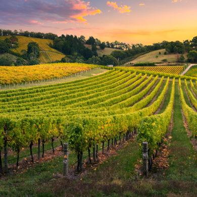 Herausragender Genuss und großartige Traditionsverbundenheit: Entdecken Sie die schonend und natürlich hergestellten Weine vom Weingut von Winning in der Pfalz