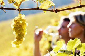 Silkes Weinblatt Quiz - testen Sie Ihr Weinwissen!