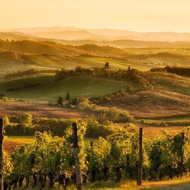 Inmitten der sanften Hügel der Toskana liegt die Heimat des Chianti – einem Rotwein, der den ganzen Zauber Italiens in sich vereint. Mehr über den Chianti erfahren