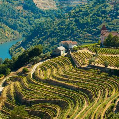 Ein Däne, der einen der besten Weine Spaniens produziert: Peter Sisseck führte mit seinem Flaggschiff-Wein