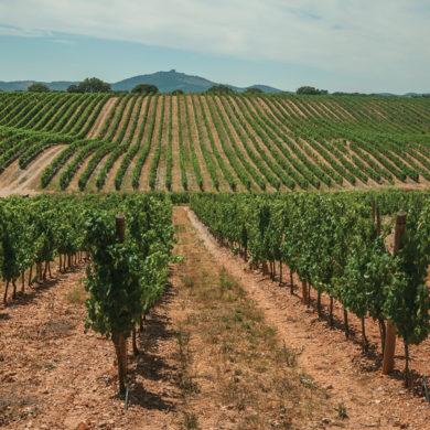 Der Boden als Teil des Terroirs ist der am einfachsten herauszuschmeckende Faktor, wenn es um das Aroma eines Weines geht. Welche Unterschiede gibt es?