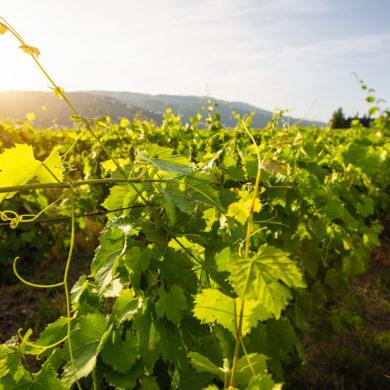 Tradition trifft auf Moderne: Bereits in der fünften Generation wird hier hochklassiger spanischer Wein in unterschiedlichen Preisklassen produziert.