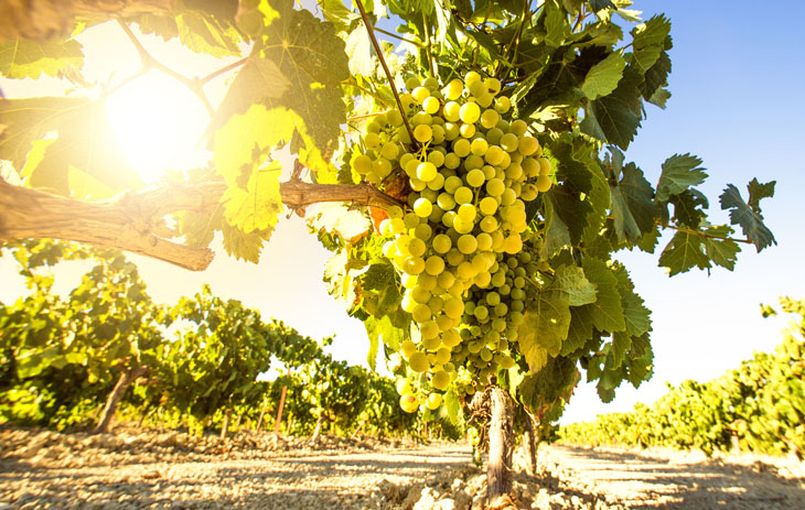 Verdejo Weißwein