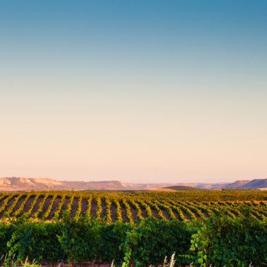Rueda gilt als einer der bedeutendsten Regionen für spanischen Weißwein. Im Herzen der Region liegt das Gut Bodegas Naia - eine gute Adresse für hochwertige Weine