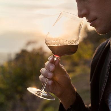 Erfahren Sie hier, welche Aromen in einem Wein stecken können. Unser Weinmaleins der Aromen liefert dabei zusätzliche Unterstützung in Wort und Bild.