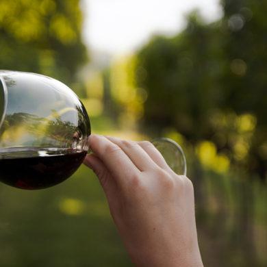 Handarbeit und über Generationen erarbeitetes Weinwissen lassen auf dem Weingut Gerhard Klein feine und ausgezeichnete Weine entstehen.