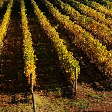 Das spanische Weingut der Familie Sangenis überzeugt Genießer und Kenner mit Weiß- und Rotweinen, die wegen ihrer niedrigen Auflage heiß begehrt sind.
