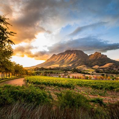 Silke Spruch hat mit ihrer Familie feine Rot- und Weißweine aus Südafrika verkostet. Die Ergebnisse teilt sie gerne mit unseren Lesern.