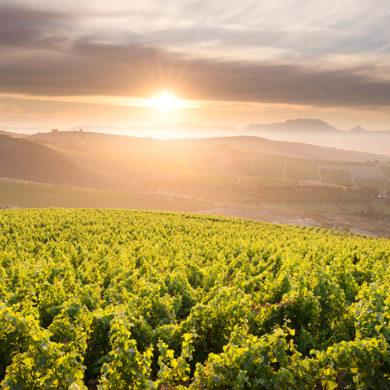 Südafrikanische Weine erfreuen sich größter Beliebtheit bei Weinkennern aus der ganzen Welt. Silke Spruch gibt eine kurze Einführung in das Weinland Südafrika.