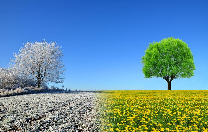 Feld mit Baum in Sommer und Winter
