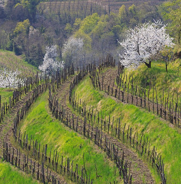 Der Frühling steht in den Startlöchern und auf dem Weingut und in den Weinbergen gibt es allerhand zu tun. Die Reben wollen versorgt sein und die Weine im Keller warten auf ihre Abfüllung und Auslieferung. Aber das ist noch lange nicht alles.