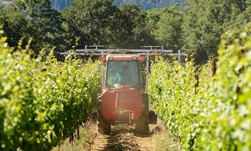Wein Pflanzenschutz | Silkes Weinblatt