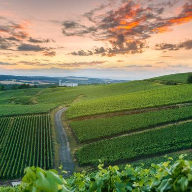 Im Mai ist der Schutz der Triebe eine der Hauptaufgaben des Winzers. Des Weiteren beschäftigen sich die Weinbauern mit der Ertragskontrolle und -regulierung.
