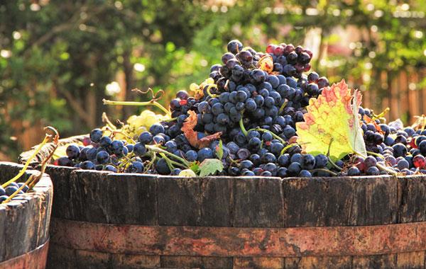 Winzerjahr Oktober 1 | Silkes Weinblatt