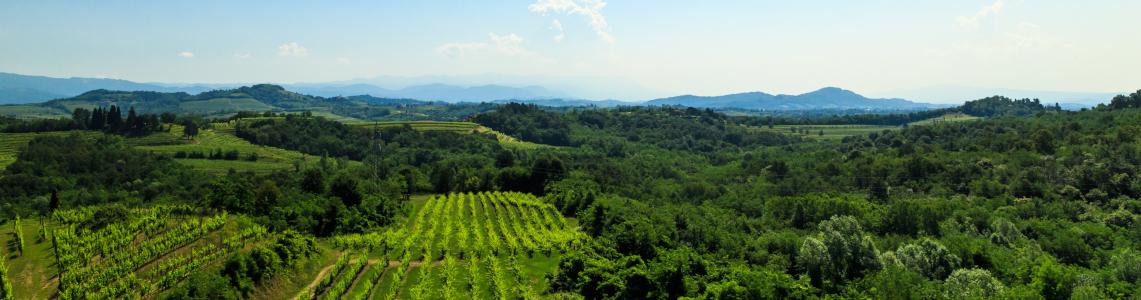 Weinfelder von Friaul-Juisch Venetien