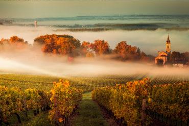 Bereits seit tausenden Jahren erzeugt die Menschheit Wein. Aller Vermutung nach nahm die Geschichte des Weinbaus im vorderen Asien ihren Anfang.
