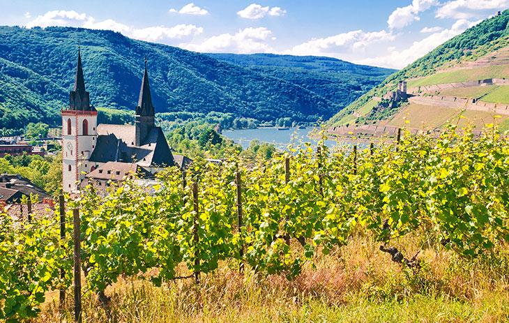 Die 13 Weinbaugebiete in Deutschland: Rheinhessen – Weinriese links des Rheins