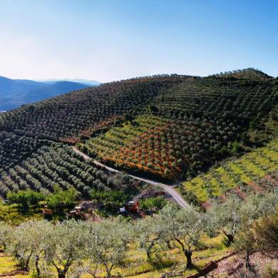 Für den spanischen Star-Winzer gibt es nicht nur ein einziges Anbaugebiet, sondern eine Vielzahl an potenziellen Entstehungsorten für seine erfolgreichen Weine.