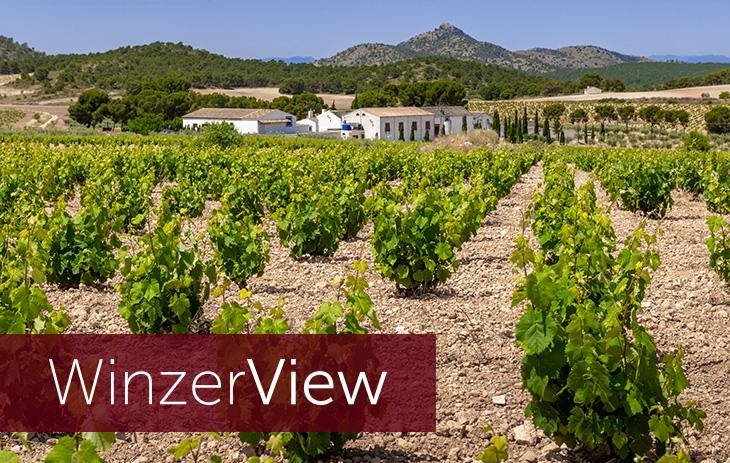 Winzerview - 14 Fragen an Bodega Casa Castillo