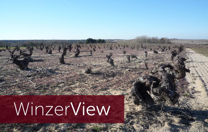 Winzerview - 14 Fragen an Bodega Juan Gil Wine Estate