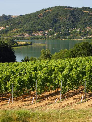 Viele Weinberge begleiten den Verlauf des Flusses Rhône von Vienne bis nach Avignon. Lesen Sie hier, was der Weinfreund von dieser Region erwarten darf.
