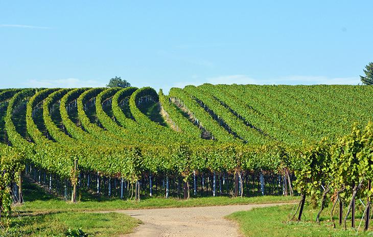 Erfahren Sie hier mehr über das kleinste Weinbaugebiet Deutschlands.