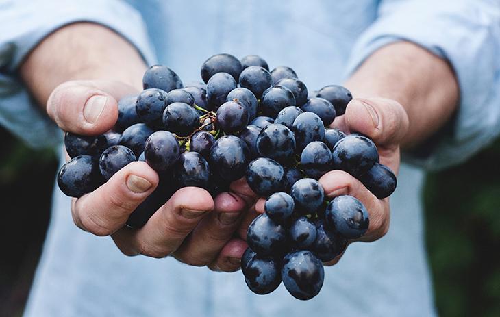Wie Tempranillo schmeckt | Silkes Weinblatt