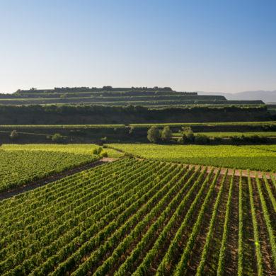 Erfahren Sie hier, inwieweit sich Baden im Hinblick auf die Weinbau-Zone von den anderen Regionen | Silkes Weinblatt