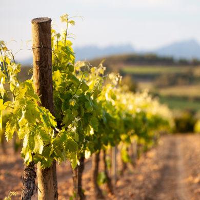 Erfahren Sie hier mehr über diese spanische Weinregion.