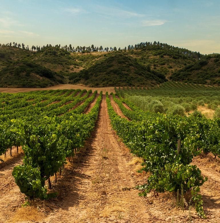 Wer Wein empfehlen möchte, muss ihn zunächst kennenlernen. Das gelingt nur im Austausch mit Menschen, die sich mit Anbau, Vinifikation und Reifung beschäftigen.