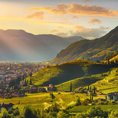 Kleine Region, aber hochqualitative Weine. Dies beschreibt die Kellerei Cantina Terlan am besten. Mit viel Mühe und Geduld entstehen unverwechselbare Weine.