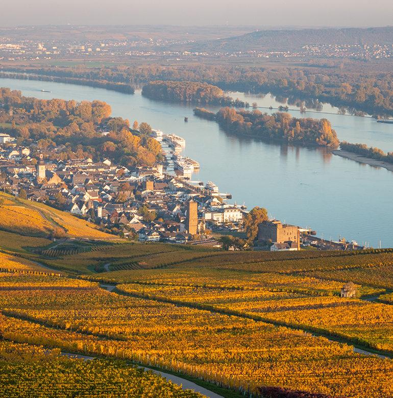 Das Weinbaugebiet Rheingau hält einige Besonderheiten für Weinliebhaber bereit, denn hier sorgen Klima, Boden und der Rhein für optimale Anbaubedingungen.