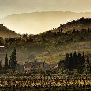 Das als Weißweinregion hochgelobte Friaul-Julisch Venetien muss sich auch in puncto Rotwein nicht verstecken. Die Rebsortenvielfalt ist dabei erstaunlich.