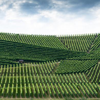 """Mit """"integriert"""" ist bei dieser Art des Weinbaus gemeint, dass der Winzer die Themen Pflanzenschutz und Rebpflege in das Ökosystem Weinberg integriert."""