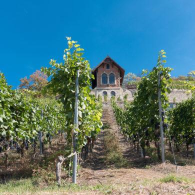 Weinterrassen, Burgen und grüne Flusstäler: Die Weinkönigin von Saale-Unstrut herrscht über ein malerisches Panorama.