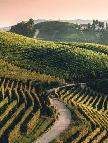 Der Trebbiano di Lugana ist kein komplizierter Tropfen. Wer sich einmal verliebt hat, wird diesen italienischen Wein immer wieder neu entdecken wollen.
