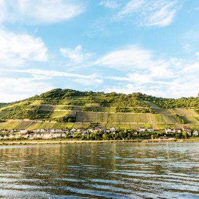 Obwohl die Region Mittelrhein zu den kleinsten Weinanbaugebieten in Deutschland gehört, bringen ihre Winzer jedes Jahr große und ausgezeichnete Weine hervor.