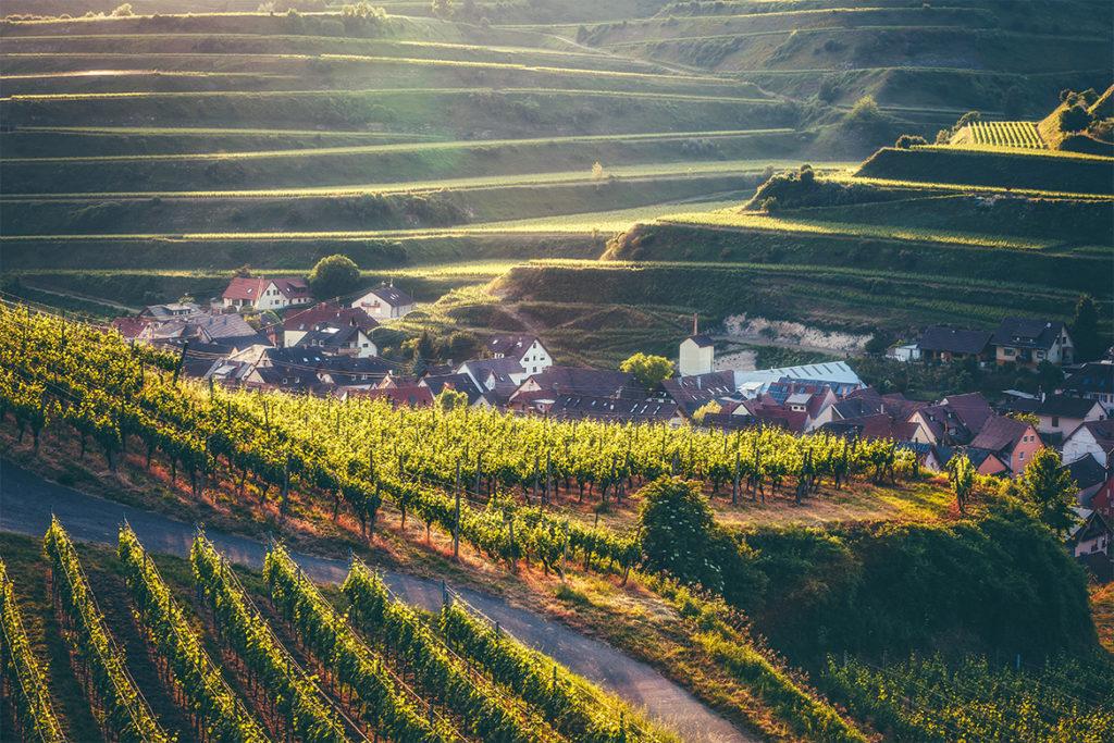 Weinberge in der Weinregion Nahe