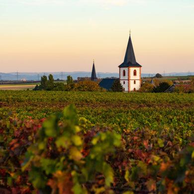 Im Bundesland Rheinland-Pfalz liegt mit Rheinhessen das größte deutsche Weinbaugebiet – Grund genug, auch dieses Anbaugebiet besser kennenzulernen.