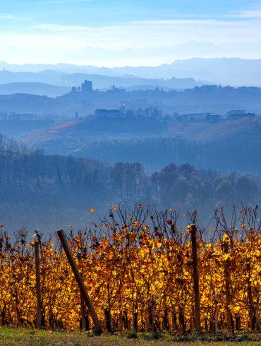 Das Weinjahr neigt sich im elften Monat seinem Ende entgegen. Im Weingut aber ist noch lange nicht Schluss, der Winzer hat noch einen vollen Kalender.