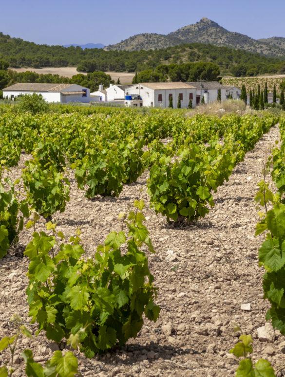 Jose Maria Vincente Sánchez-Cerezo, Winzer und Inhaber des spanischen Weinguts in der Region Jumilla, war so nett, unsere 14 Fragen im Winzerview zu beantworten.