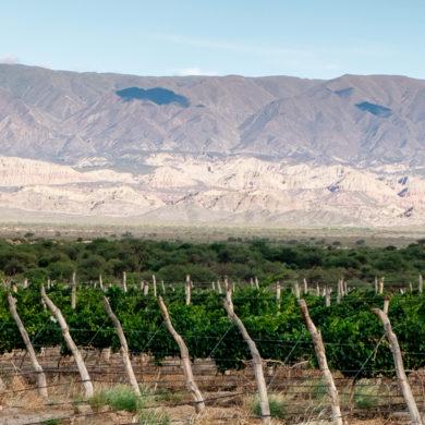 Silkes Weinkeller-Mitarbeiterin Aiko schildert die Erlebinsse und Eindrücke von Ihrer Winzer-Tour durch Südamerika – genauer gesagt durch Argentinien und Chile.