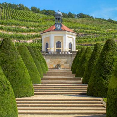 sachsen weinanbau 770x513 1 | Silkes Weinblatt