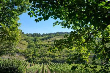 Weinberg in Franken hinter Bäumen   Silkes Weinkeller