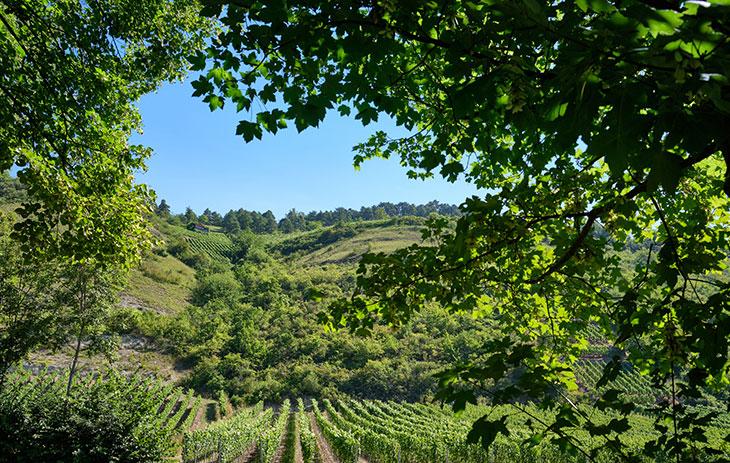 Weinberg in Franken hinter Bäumen | Silkes Weinkeller