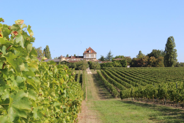 Weingut von Vignoble Ducourt | Silkes Weinkeller