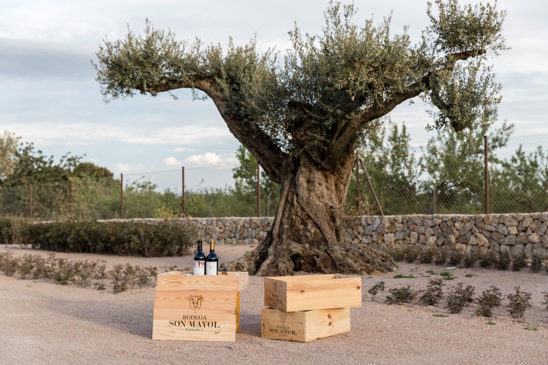Weinflaschen von Bodega Son Mayol vor einem Baum   Silkes Weinkeller